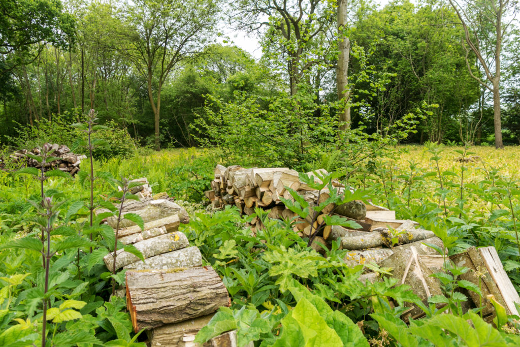 Wood stack in coppiced woodland